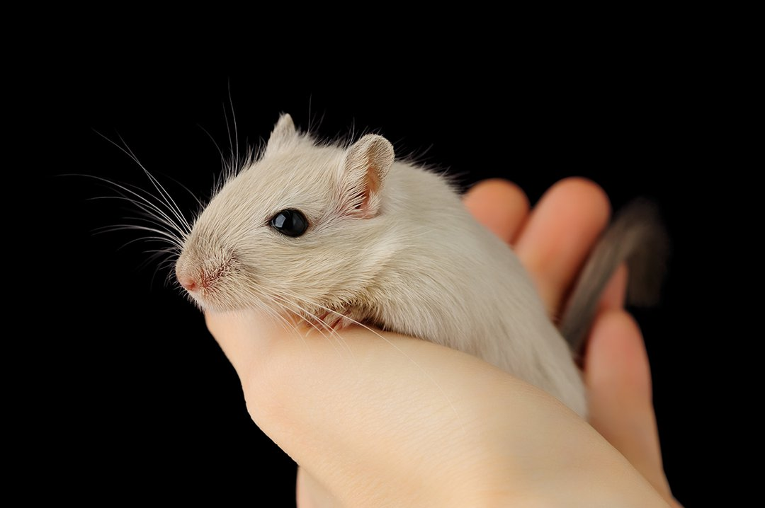 gerbil-in-hand