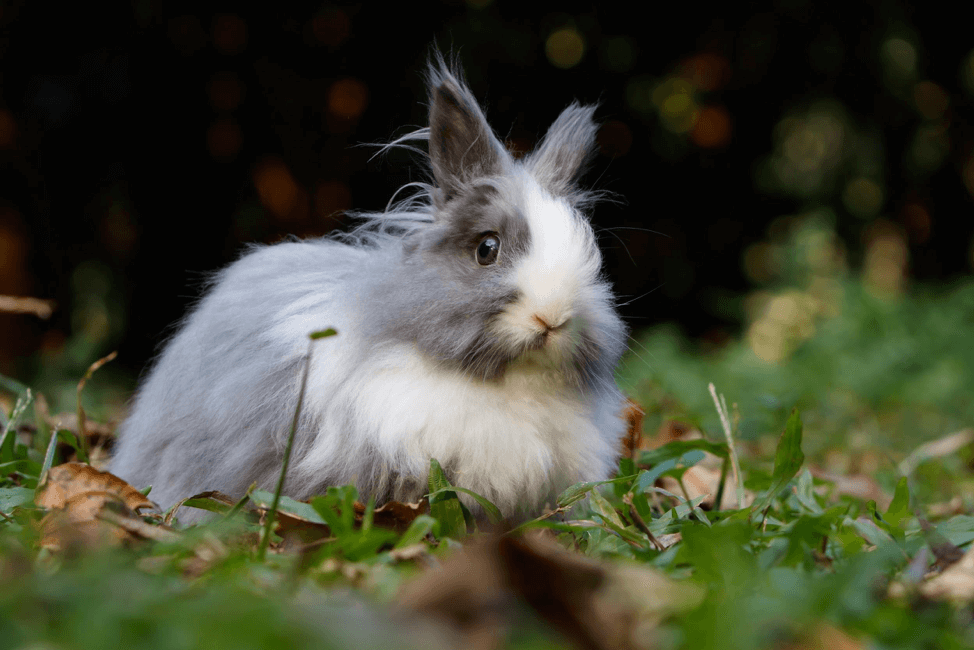 bunny-eye-care-everything-you-need-to-know