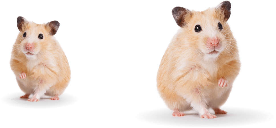 hamster-group