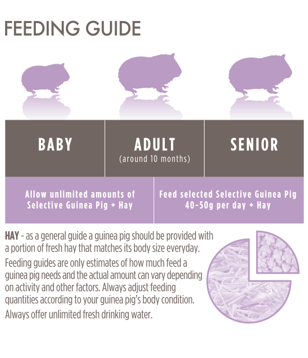 Grain-Free Guinea Feeding Guide