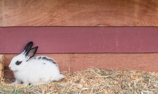 rabbit-hutch-s