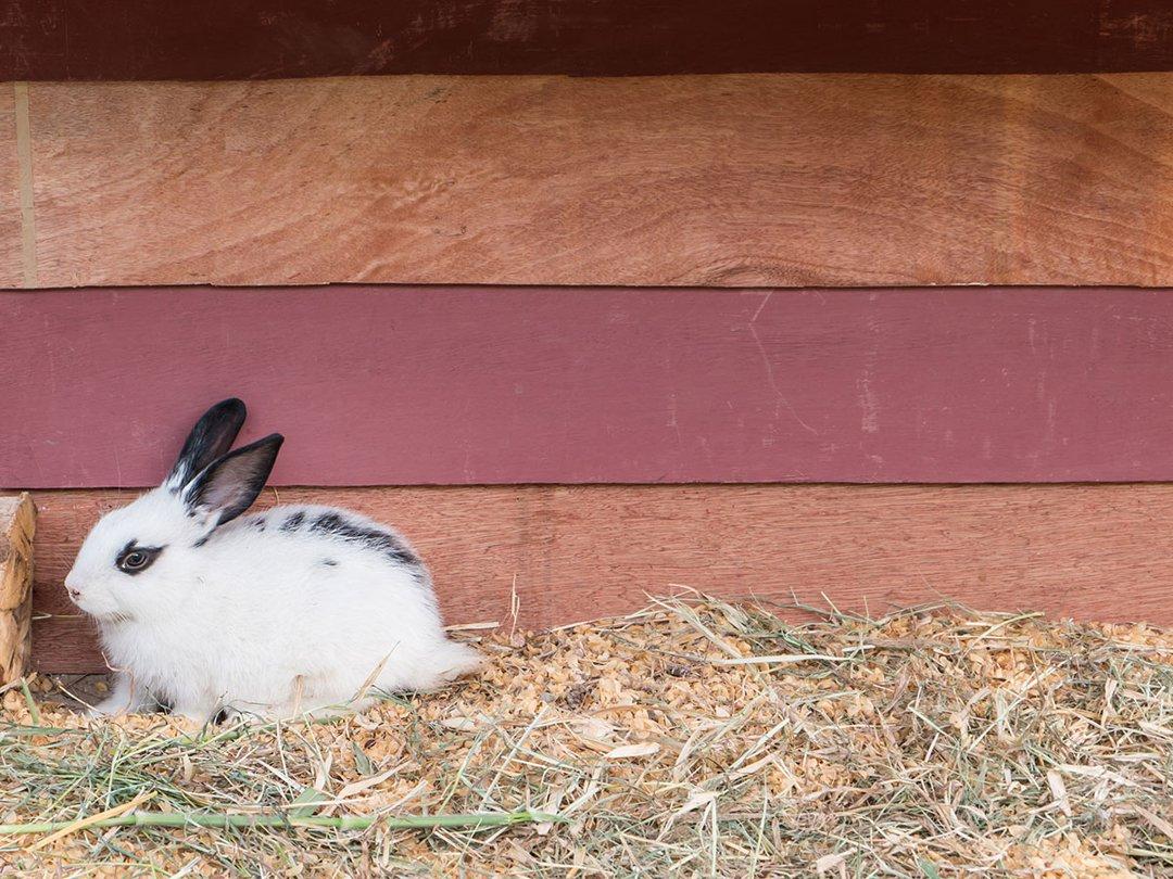 konijnenhok-ruimte
