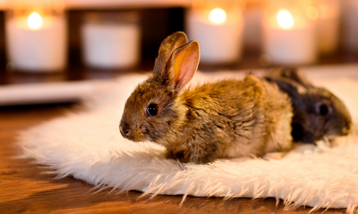 Winter Care for rabbits