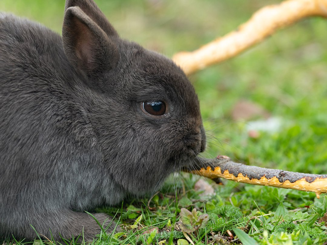 rabbit wood