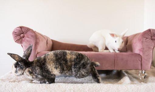 rabbits sofa