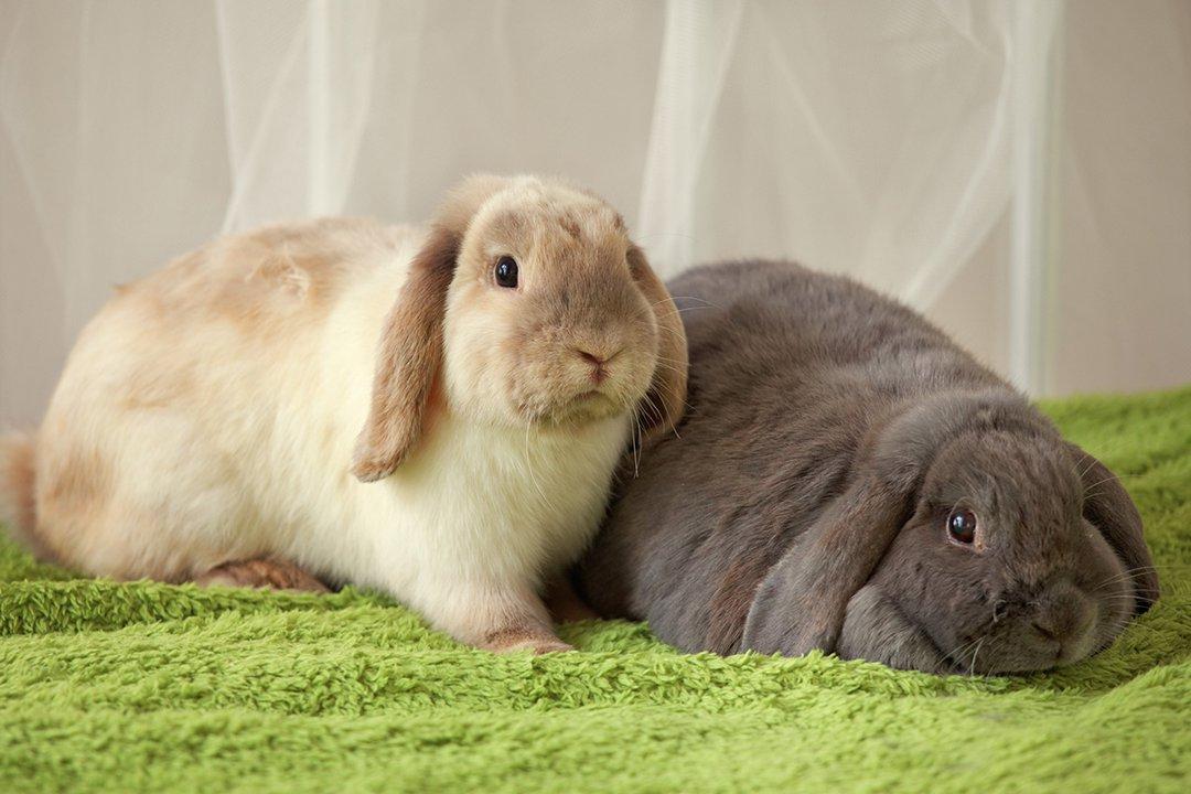 rabbits blankets