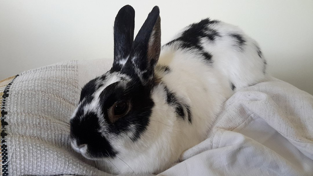 Rabbit-blanket