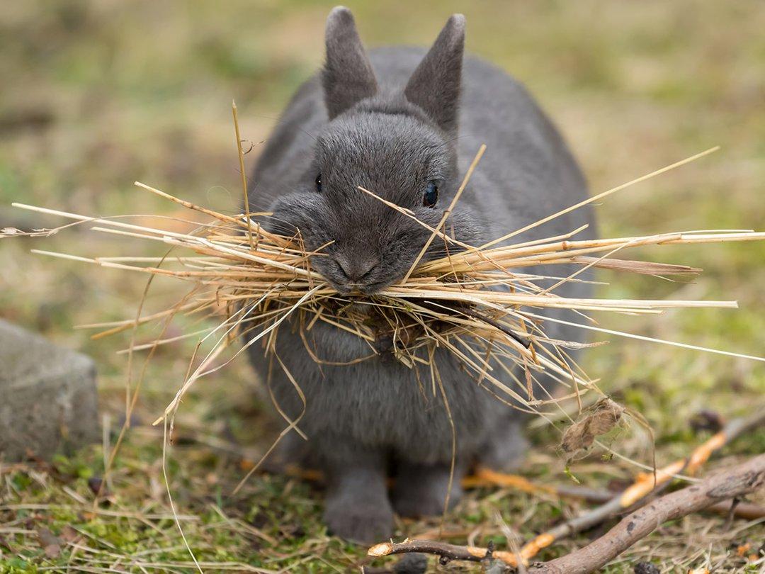 hay eating hay