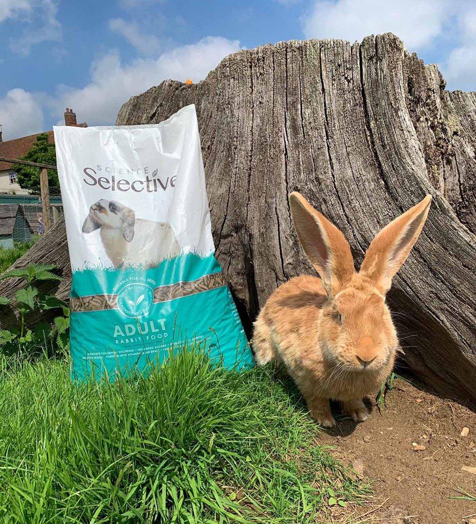Rabbit Adult Jimmy's Farm